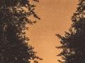 _AX_1336-Panorama